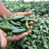 El Gobierno del Estado fortalece sus lazos con horticultores del sur