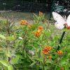 El mes de la mariposa
