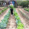 Con hortalizas y obras de almacenamiento de agua el Gobierno del Estado fortalece al Sector Rural.
