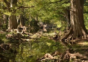 Intensifica Gobierno del Estado cuidado de Áreas Naturales Protegidas (ANPs).