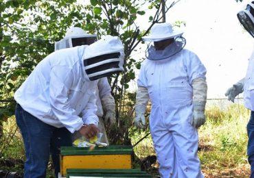 GobTam exhorta a los apicultores a que aprovechen el subsidio en areteo de colmenas
