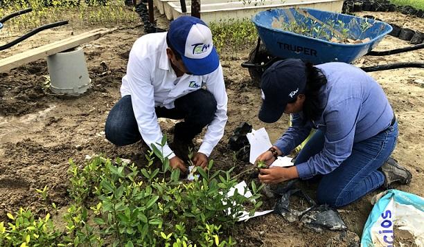 Recupera gobierno del estado manglar en litoral costero