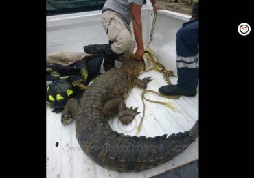 Zona sur de Tamaulipas en primer lugar de ataques mortales de cocodrilos.