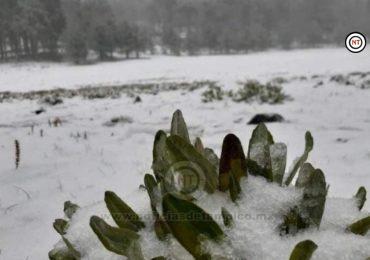 Cae nieve en la sierra de Miquihuana, Tamaulipas
