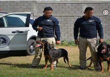 Con perros adiestrados aceleran la búsqueda de desaparecidos en Tamaulipas