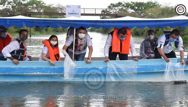 Siembran 30 Mil Alevines en el Sistema Lagunario de Tampico