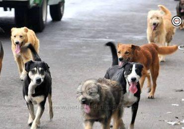 Registra Sector Salud 40 ataques de perros a personas de julio a la fecha