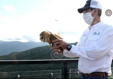 Libera Comisión de Parque y Biodiversidad lechuzas en Camino Real a Tula