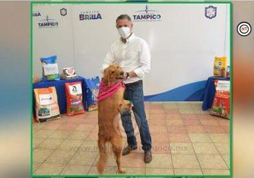 Sanciona y Amonesta Gobierno Porteño a Maltratadores de Animales Domésticos