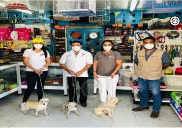 Refuerzan Campaña de Esterilización Canina y Felina en Situación de Calle
