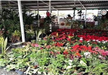 Tiene 'Mercado Municipal' de NLD espacio sin costo para comerciantes